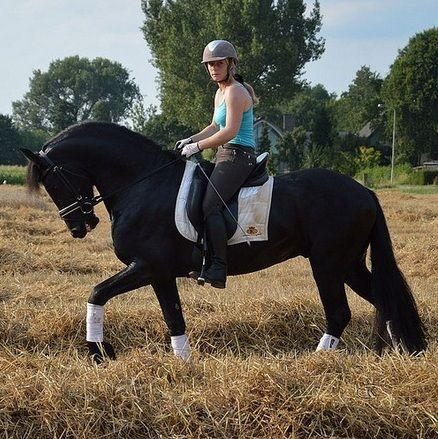 Friesian horses for sale, farms, for Sale, Price