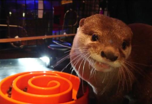adorable otter seeking a new home txt 7572510652
