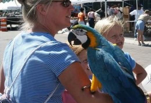 Hand-reared Macaw Parrots available