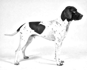 Breed Old Danish Pointer