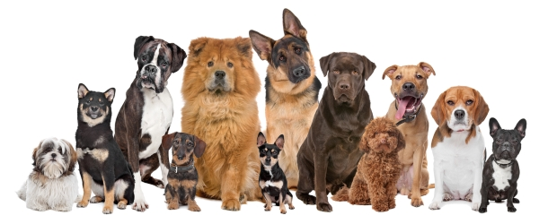 all dog breeds information