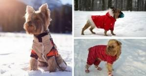 how-to-dress-your-four-legged-friend-in-winter.jpg