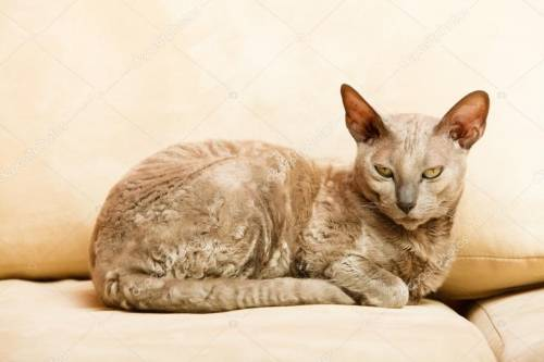 depositphotos_69865487-stock-photo-animals-at-home-egyptian-mau.jpg